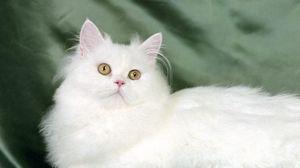 Превью обои кот, пушистый, шелк, лежать