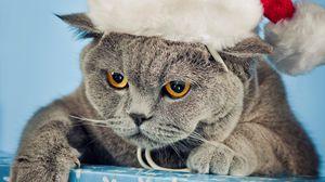 Превью обои кот, шапка, новый год, красивый