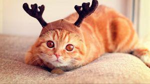 Превью обои кот, шапка, рога, прикольный, лежать