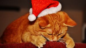 Превью обои кот, шапка, санта клаус, новый год