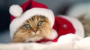 Превью обои кот, шапка, взгляд, размытость