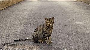 Превью обои кот, тротуар, сидеть, полосатый