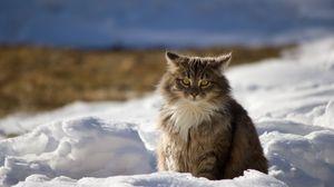 Превью обои кот, зима, пушистый, снег