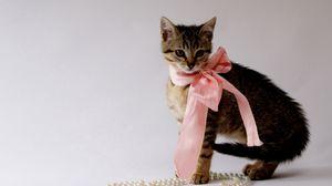 Превью обои котенок, бант, бусы, украшения, красивый