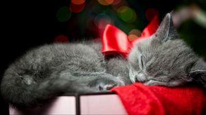 Превью обои котенок, бант, сон