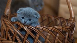 Превью обои котенок, британец, милый, грустный, корзинка