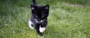 Превью обои котенок, кот, трава, прогулка, милый