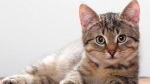 Превью обои котенок, лежать, морда