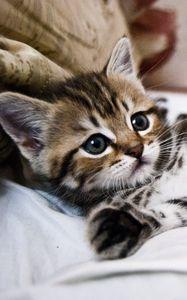 Превью обои котенок, лежит, полосатый, маленький, милый