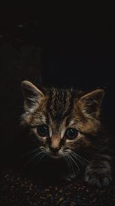 Превью обои котенок, милый, маленький, коричневый, питомец