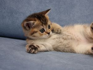 Превью обои котенок, милый, лежать