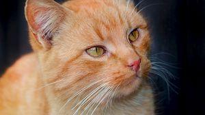 Превью обои котенок, морда, усы, взгляд