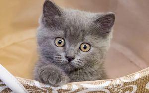 Превью обои котенок, питомец, милый