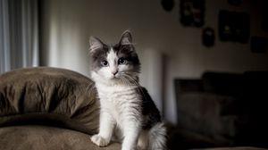 Превью обои котенок, пушистый, пятнистый, диван