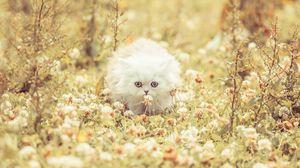 Превью обои котенок, пушистый, трава, цветы, бежать