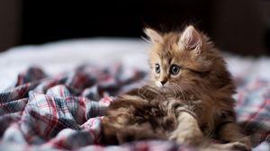 Превью обои котенок, пушистый, взгляд