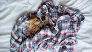 Превью обои котенок, пушистый, сон, рубашка, постель