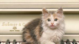 Превью обои котенок, пушистый, взгляд, рояль