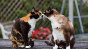 Превью обои коты, поцелуй, нежность