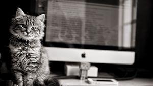 Превью обои котёнок, кот, кошка, компьютер, клавиатура, apple, mac, чб