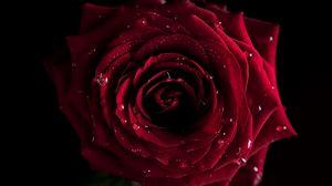 Превью обои красный, цветы, макро, роза