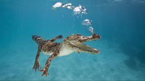 Превью обои крокодил, детеныш, плавать, подводный мир, пузыри, дыхание