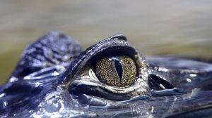 Превью обои крокодил, глаз, опасный