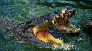 Превью обои крокодил, морда, оскал, вода, хищник