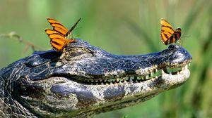 Превью обои крокодил, морда, зубы, бабочки