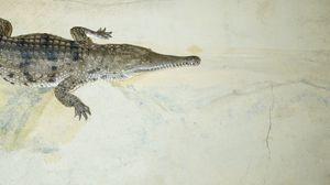 Превью обои крокодил, пасть, маленький