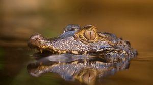 Превью обои крокодил, вода, морда, глаза, злость, хищный
