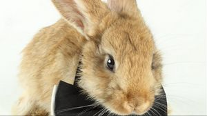 Превью обои кролик, бант, шерсть, малыш