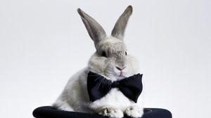 Превью обои кролик, бант, шляпа