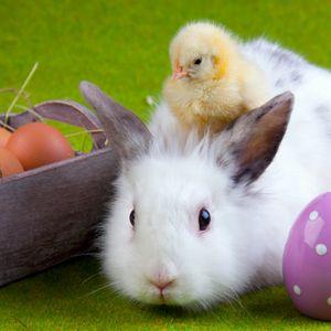 Превью обои кролик, цыплёнок, яйца, пасха, дружба