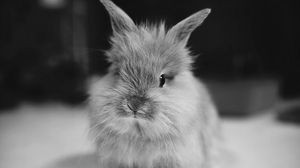 Превью обои кролик, маленький, пушистый, чб