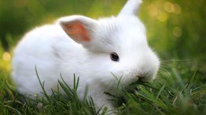 Превью обои кролик, трава, еда, милый