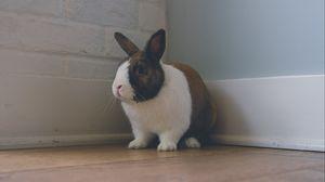 Превью обои кролик, уши, милый