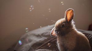 Превью обои кролик, уши, мыльные пузыри