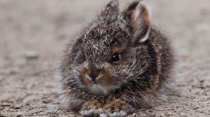 Превью обои кролик, заяц, милый, пушистый, испуг