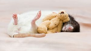 Превью обои крыса, игрушка, сон, грызун