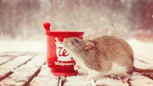 Превью обои крыса, снег, ступка, грызун