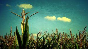 Превью обои кукуруза, небо, голубое, искусство, поле, урожай