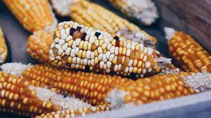 Превью обои кукуруза, початки, овощи