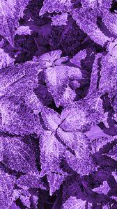 Превью обои куст, листья, макро, фиолетовый
