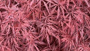Превью обои куст, листья, розовый, макро