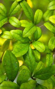 Превью обои куст, ветки, листья, макро, зеленый