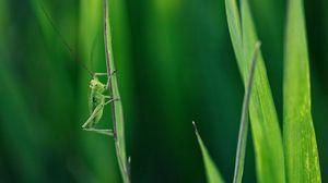 Превью обои кузнечик, трава, усы