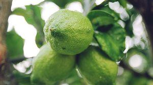 Превью обои лайм, цитрус, ветка, фрукт