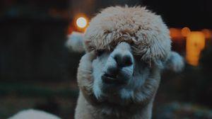 Превью обои лама, забавный, верблюд, эмоции