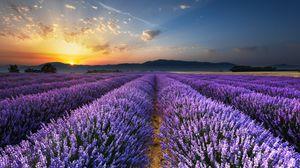 Превью обои лаванда, поле, цветы, горизонт